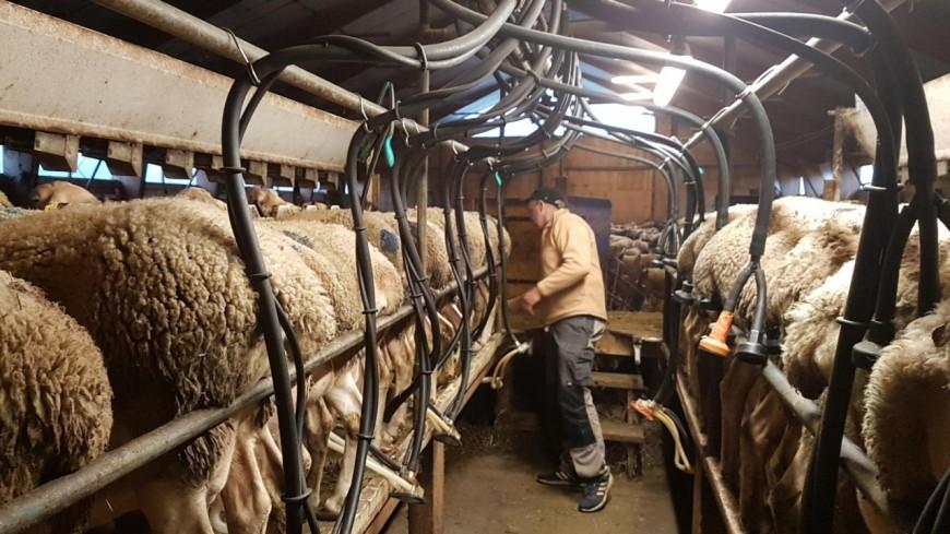 hautes alpes yaourts faisselles tomes direction la ferme de chanterelles. Black Bedroom Furniture Sets. Home Design Ideas