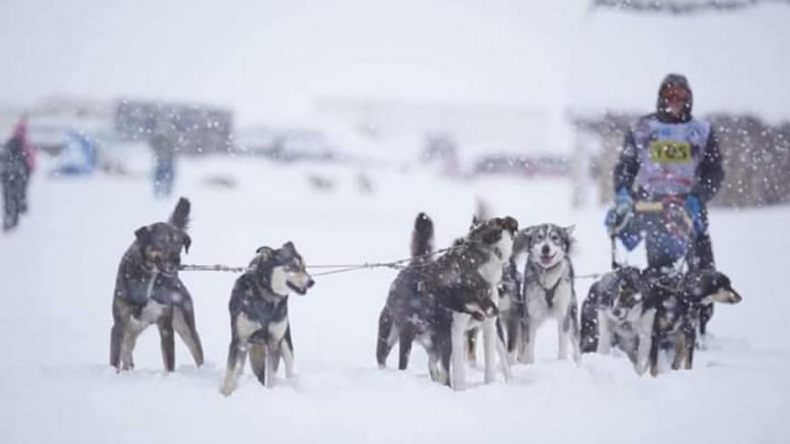 Hautes-Alpes : Jordi Allirand a remporté la course de chiens de traineaux Vercors Quest 300