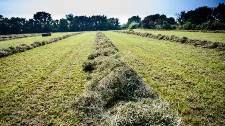 Alpes de Haute-Provence : sècheresse 2017, les dossiers d'indemnisation sont à retirer