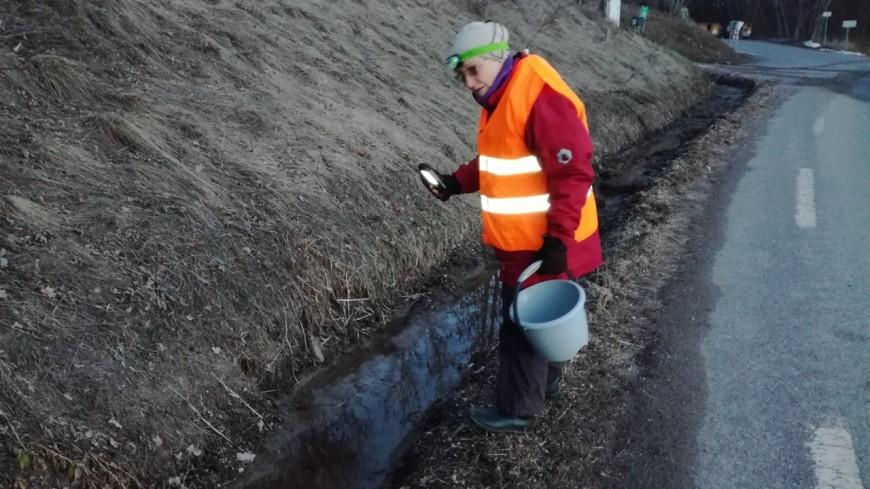 Hautes-Alpes : des patrouilleurs à Pelleautier pour sauver les crapauds et les grenouilles
