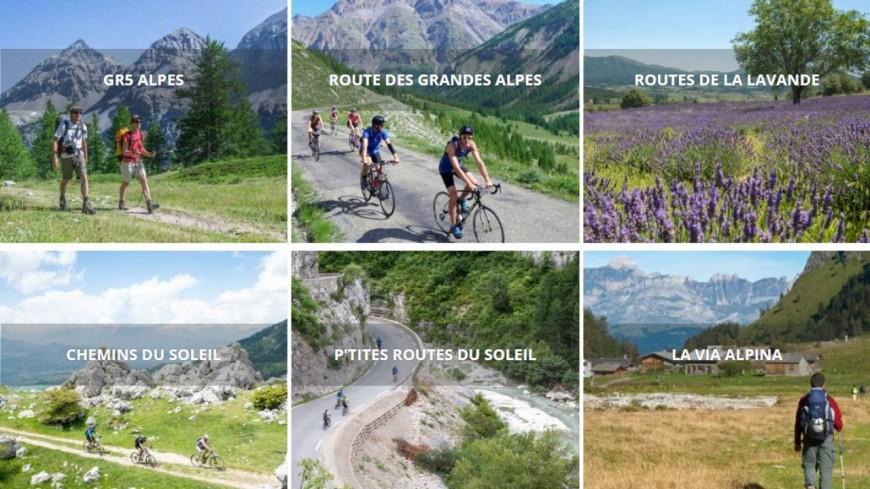 Alpes du Sud : la Grande Traversée des Alpes menacée d'extinction