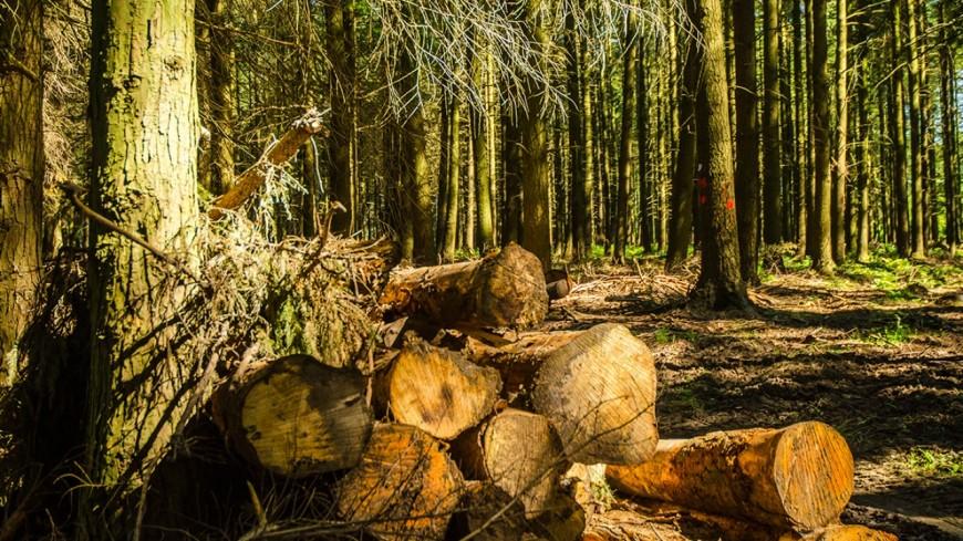 Hautes-Alpes : vers plus d'exploitation des forêts ?