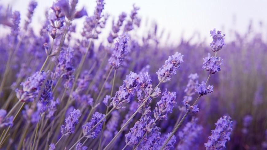 Alpes de Haute-Provence : un musée de l'herboristerie à Forcalquier