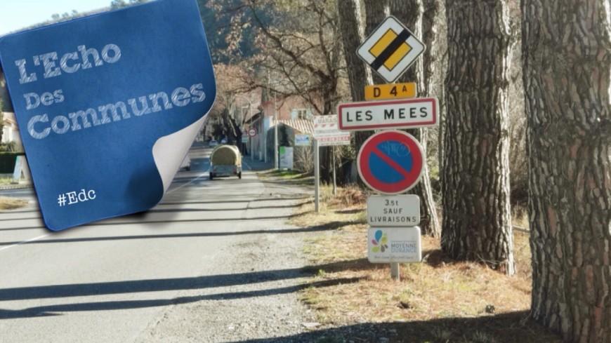 Alpes de Haute-Provence : 90.000 oliviers sur la commune des Mées
