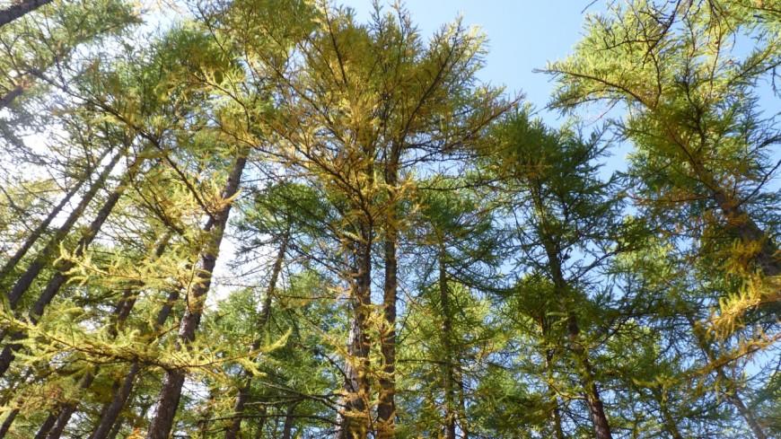 Hautes-Alpes : plantons pour la forêt, une opération lancée ce mardi