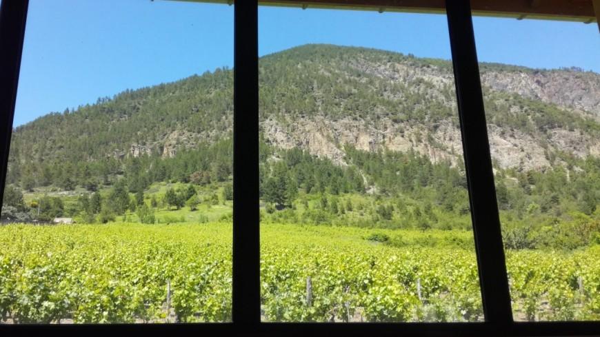 Hautes-Alpes : le musée du vin de Remollon ouvrira bientôt