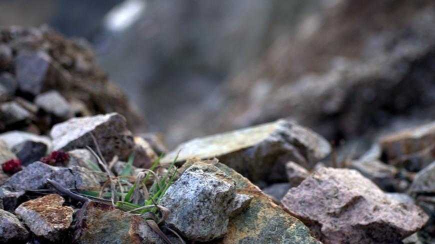 Hautes-Alpes : éboulement à La Grave, plus de 20 brebis tuées