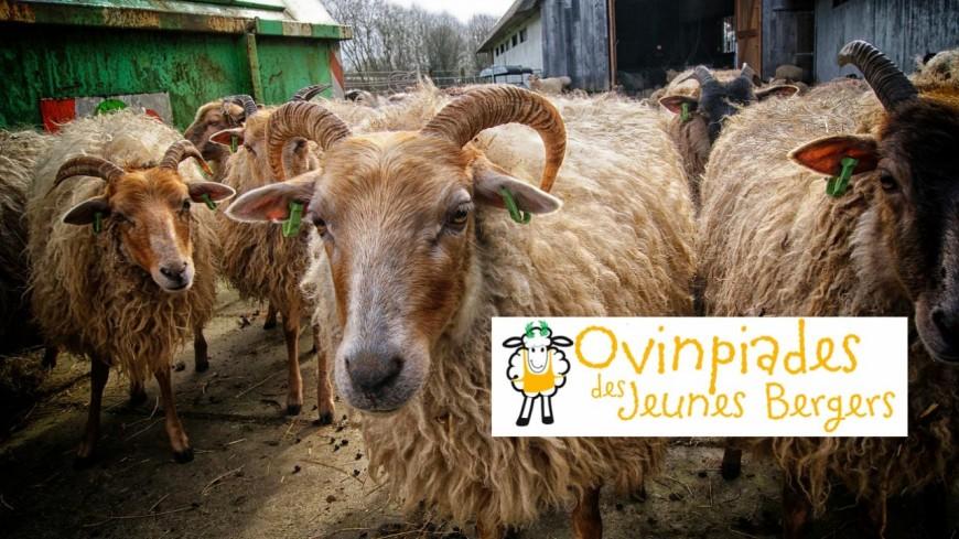 Alpes de Haute-Provence : ils s'affronteront pour devenir le meilleur jeune éleveur