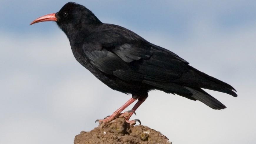 Hautes-Alpes : des ornithologues germanophones visitent le Parc des Écrins