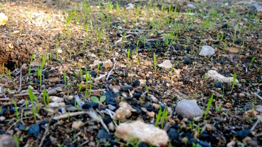 Hautes-Alpes : après un incendie, quelle biodiversité possible ?