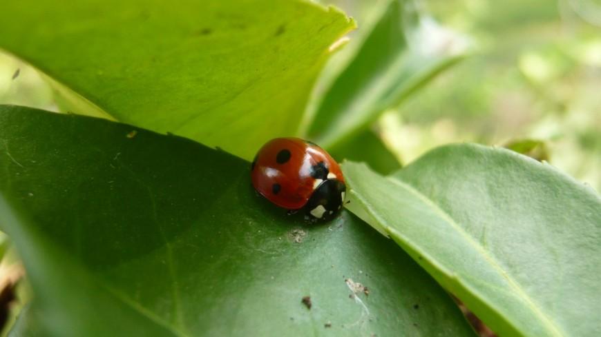 Hautes-Alpes : la biodiversité disparaît progressivement