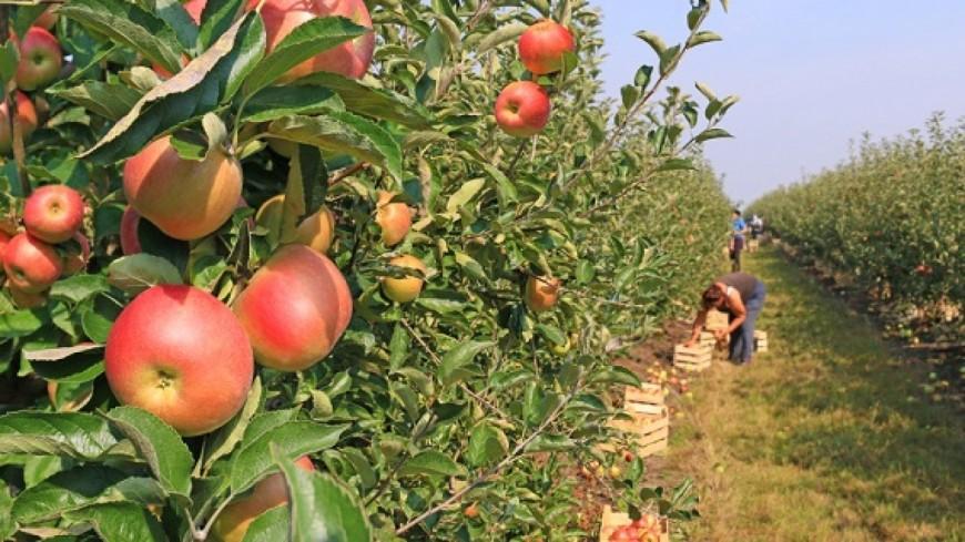 Alpes du Sud : saisonniers agricoles, Joël Giraud saisit le gouvernement