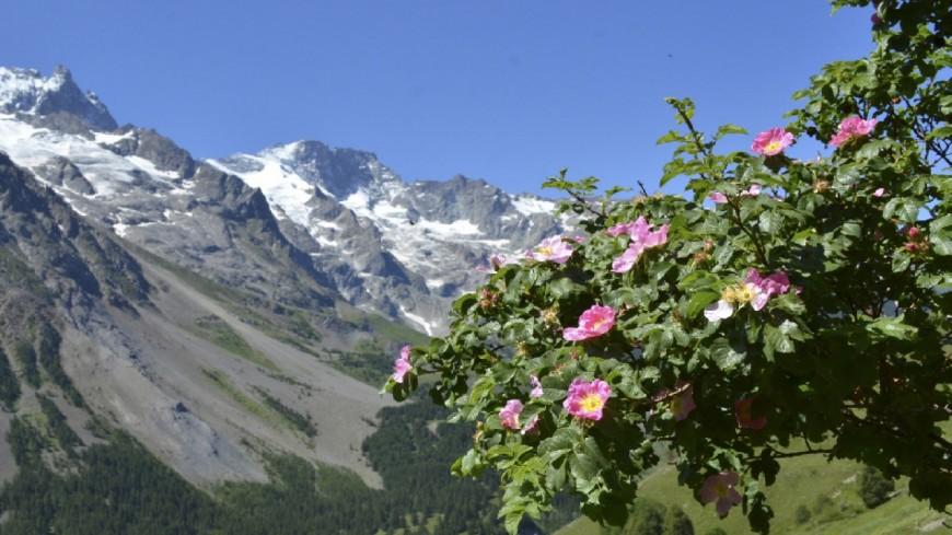 Hautes-Alpes : 700 espèces de plantes sauvages du Briançonnais à découvrir à l'occasion d'une exposition