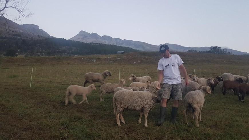 Hautes-Alpes : 35 animaux d'élevage tués dans le Dévoluy