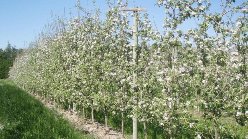 Alpes de Haute-Provence : gelées dans l'arboriculture, J-Y.Roux sollicite un arrêté de calamité agricole