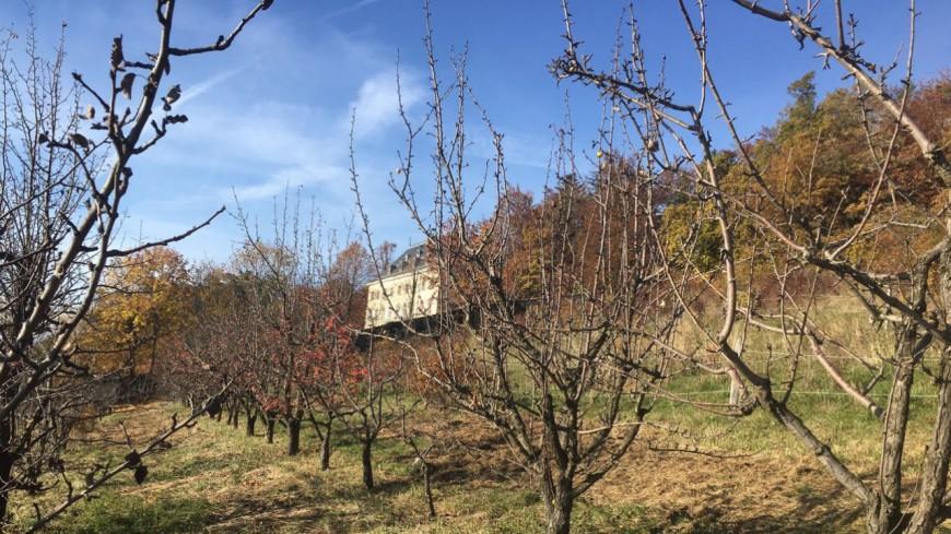 Hautes-Alpes : restauration de vergers abandonnés à Gap-Charance