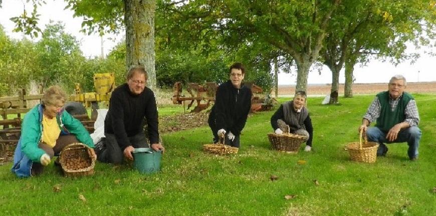 Alpes du Sud : notre conseil du jour : la cueillette des noix aux Mées