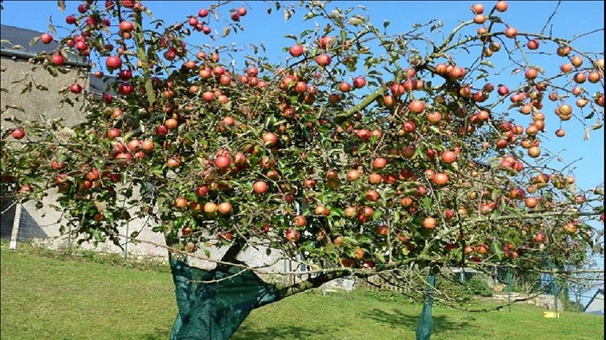 Hautes-Alpes : Stage de taille des arbres fruitiers le 10 février à Trescléoux.