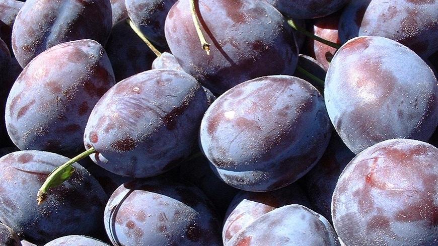 Alpes du Sud : notre conseil culinaire du jour : Recettes avec des prunes.