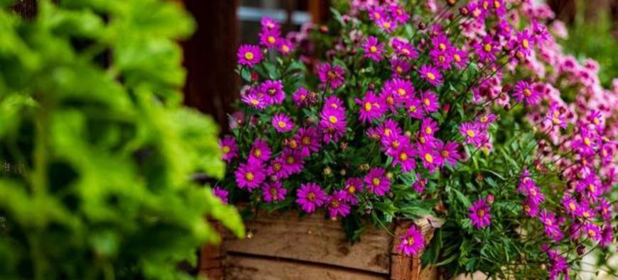 Haute-Provence : nouveau concours des Maisons fleuries à Digne
