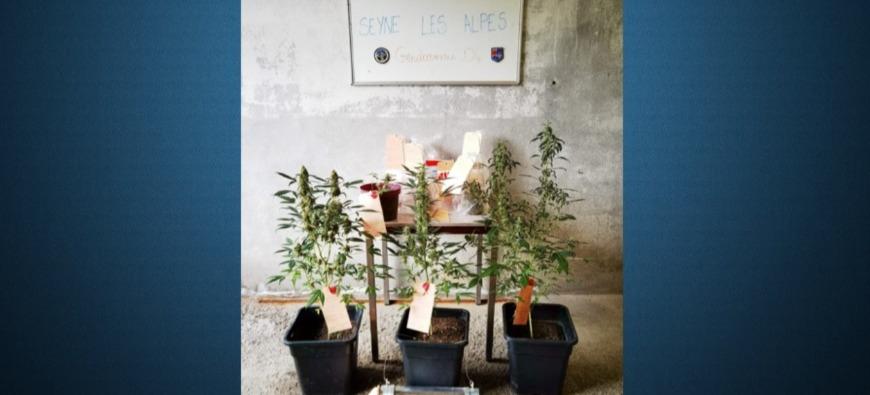 Haute-Provence : ils lui portent une convocation et tombent sur du cannabis