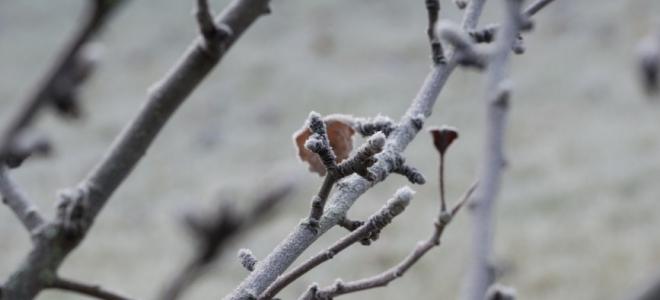Alpes de Haute-Provence : 28 communes indemnisées pour les gelées noires